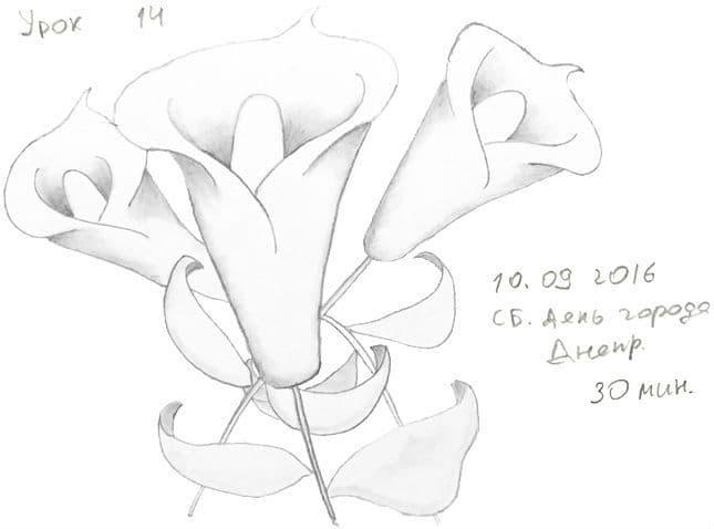 Как научиться рисовать карандашом урок 14. 3 цветка